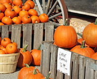 Pie Pumpkins For Sale at an outdoor Farmer's Market Royalty Free Stock Images