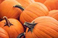 Pie pumpkins for sale in autumn. Pie pumpkins for sale at a pumpkin patch in autumn Royalty Free Stock Photos