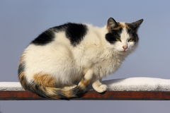 Piebald cat on the fence Stock Image