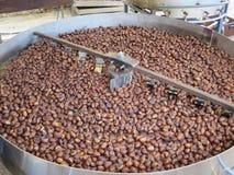 Piec brown kasztany Zdjęcie Stock