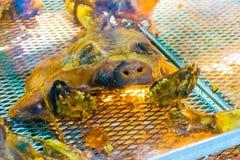 Piec grill świnia Obraz Stock