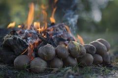 Piec grule blisko płonącego pożaru lasu Zdjęcie Stock