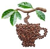 Piec kawowe fasole w formie filiżanki obwieszenia od kawy rozgałęziają się zdjęcia royalty free