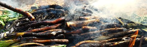 Piec na grillu cebule, tradycyjny Catalonia jedzenie zdjęcia royalty free