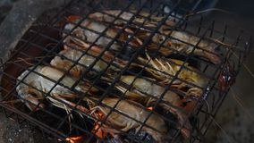 Piec na grillu krewetkowa Gigantyczna słodkowodna krewetka zdjęcie wideo