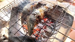 Piec na grillu ryba na gorącym ogieniu zdjęcie wideo