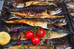 Piec na grillu rybia makrela słuzyć na jedzenie kramu na otwartym kuchennym międzynarodowym karmowym festiwalu wydarzeniu uliczny Obraz Royalty Free