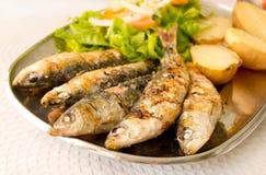 Piec na grillu sardynki z śródziemnomorskimi sałatkowymi i gotowanymi grulami obraz royalty free