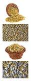 Piec słonecznikowi nasiona Obraz Royalty Free