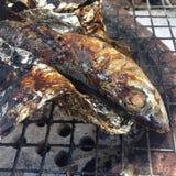 Piec saba ryba l Zdjęcie Royalty Free