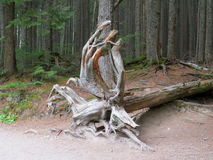 A piece of art from Nature at Avalanche Lake in Glacier Stock Photography