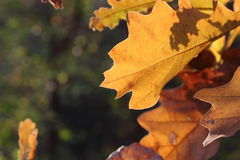 A Piece of Autumn Stock Image