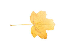 Piece of autumn leave witheringin fall Stock Photography