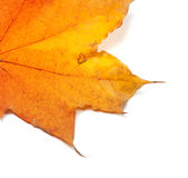 Piece of autumn yellow maple-leaf Royalty Free Stock Photography