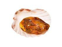 Piece of baltic amber on seashell Stock Photography