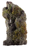 Piece of bark covered with moss and lichen. On white background Royalty Free Stock Photos