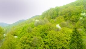 A piece of beauty in the Zagreb forest - Sljeme Royalty Free Stock Photos