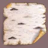 Piece of birch bark. Twisted piece of birch bark royalty free illustration