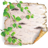 Piece of birch bark. Twisted piece of birch bark with green branches royalty free illustration