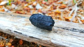 A Piece of Black Charcoal Isolation. The  charcoal in garden Royalty Free Stock Photo