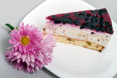 Piece of blueberry cake and asters Stock Photos