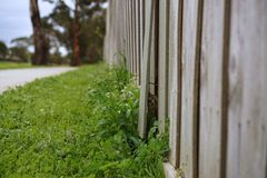 A piece of broken wooden fence. Close up view of broken wooden fence royalty free stock photography