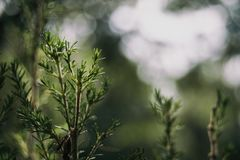 Piece of bush with bokeh stock photo