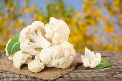 Piece of cauliflower on wooden table with blurred garden background.  Royalty Free Stock Photos