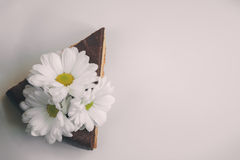 Piece of chocolate cake with flowers on white background. Instag Stock Photography