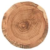 Piece of circular wood cross section with tree growth rings. Oak tree slice texture isolated on white background. Overhead view royalty free stock image