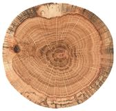 Piece of circular wood cross section with tree growth rings. Oak tree stump texture isolated on white background stock images