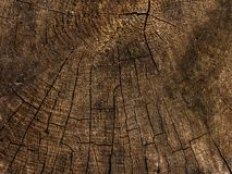 Natural wood tree rings suitable as background. Piece of circular wood stump with cracks and tree growth rings. Copy space for text. Natural wood texture as stock photo