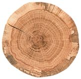 Piece of circular wood stump with cracks and tree growth rings. Oak tree slice texture isolated on white background royalty free stock photo