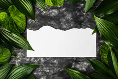 Piece of clean paper on a dark background surrounded by leaves, Stock Photo