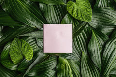 Piece of clean paper on a dark background surrounded by leaves, Royalty Free Stock Photos