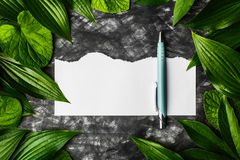 Piece of clean paper on a dark background surrounded by leaves, Royalty Free Stock Image