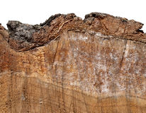 Piece of cut wood with bark Royalty Free Stock Photos