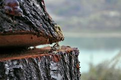 Piece of cut wood with lake in background Royalty Free Stock Photo