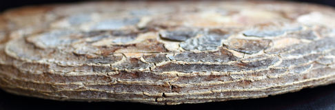 Piece of dried bark of old a tree Royalty Free Stock Photos