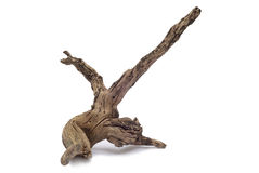 Piece of driftwood Royalty Free Stock Photography