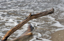 Piece of driftwood on a beach Stock Image