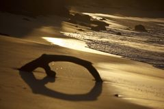 Caribbean Beach Driftwood At Sunset, Antigua. A piece of driftwood embedded in the sand of a beach in Antigua. Shot against the sunset with natural sepia tone.n Stock Photos