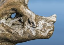 Piece of driftwood resembling a rhinoceros head Royalty Free Stock Photos
