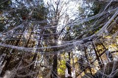 Piece of a forest decorated with cobweb with a sun rays coming from above royalty free stock photos