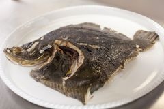 Piece of fresh fish fillet. With part of the tail and fin still intact lying skin up on a plate waiting to be prepared for dinner Stock Images