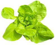 Piece of fresh lettuce salad isolated on white Stock Image