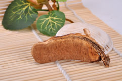 A piece of ganoderma--a traditional chinese medicine Royalty Free Stock Images