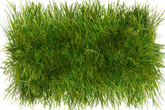 Piece of grass Royalty Free Stock Photography