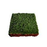 Piece of grass Stock Photos