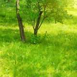 A piece of green urban park Royalty Free Stock Photography